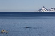 The Arctic (Norway & Svalbard)