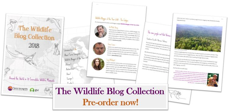 Wildlife Blogger of the Year - Featured Image Pre-order