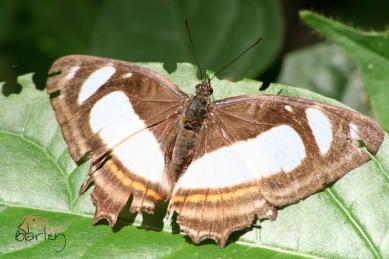 brown & white 4